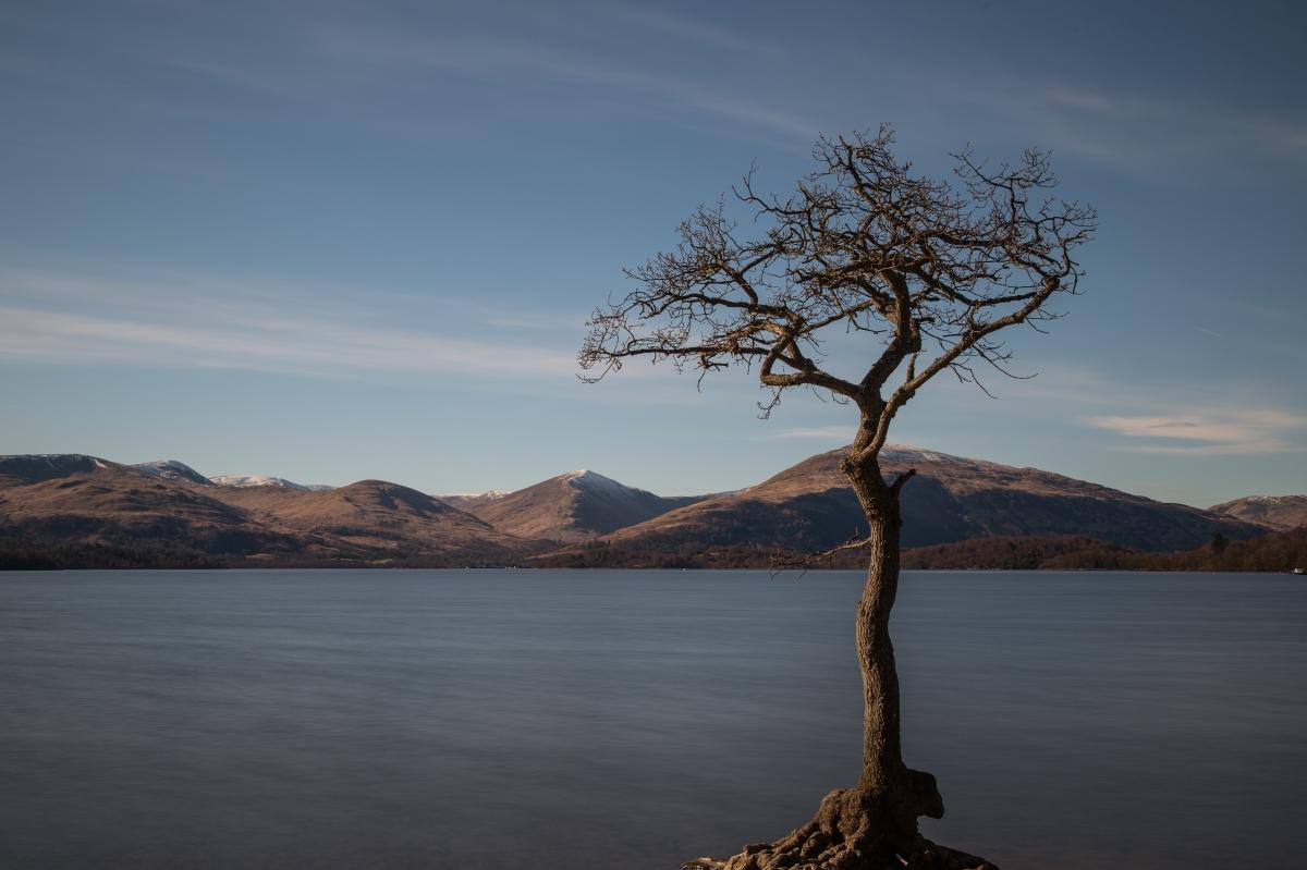 Loch Tree -D-0167